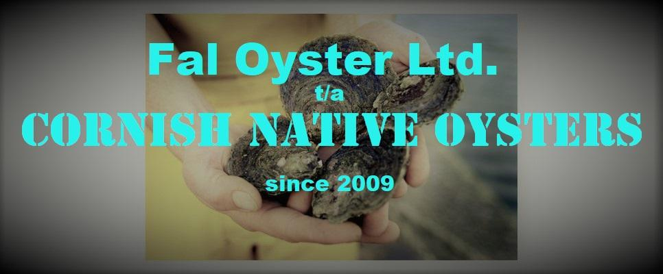 Cornish Native Oysters - since 2009