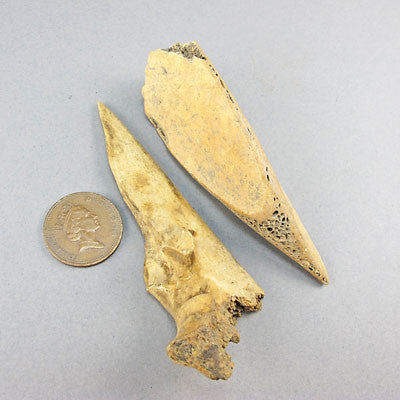 Ancient artifact pre historic bone tools