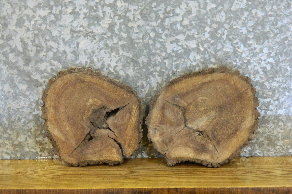 2- Round Cut Live Edge Bark Black Walnut Wall Art Wood Slabs 12152-12153