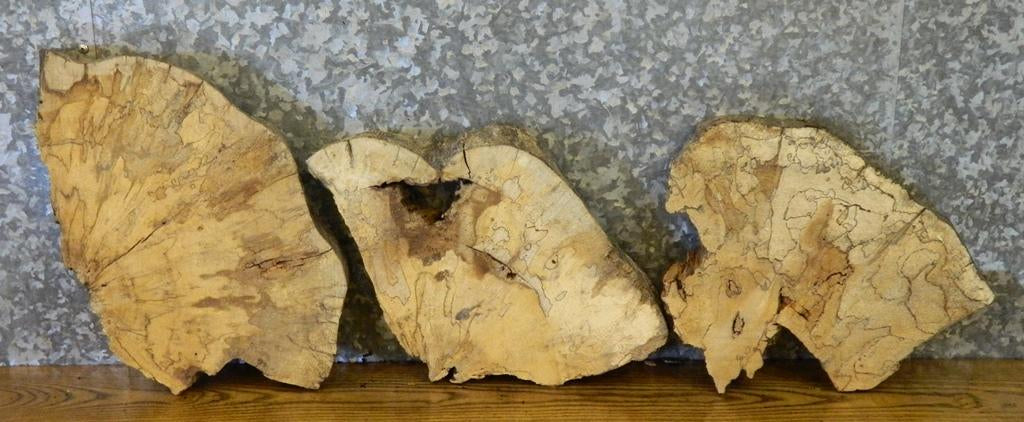 3- Live Edge Spalted Maple Oval Cut Taxidermy Base Slabs 12230-12232