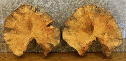 2- Round Cut Live Edge Spalted Maple Centerpiece Wood Slabs 12300-12301