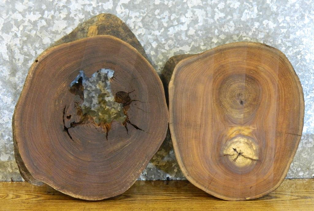 2- Rustic Live Edge Elm Taxidermy Base/Room Decor Round Cut Slabs 12419-12420