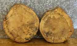 2- Hackberry Round Cut Live Edge Clock Plaque Slabs 12431-12432