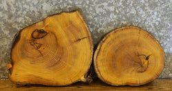 2- Natural Edge Mulberry Centerpiece Round Cut Wood Slabs 12504-12505