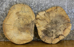 2- Hackberry Live Edge Round Cut Centerpiece/Taxidermy Base Slabs 12534-12535