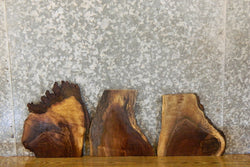 3- Rustic Live Edge Black Walnut Craft Pack/Taxidermy Base Slabs 12615-12617
