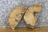 2- Natural Edge Round Cut Spalted Maple Centerpiece Slabs 12635-12636