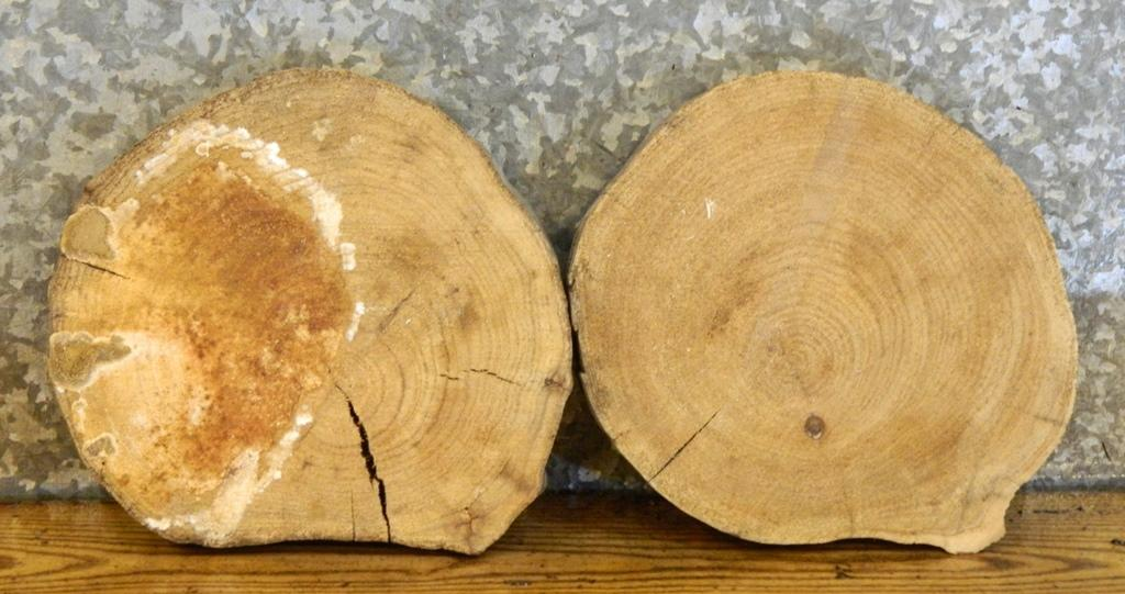 2- Tree Log Slice Live Edge Elm Taxidermy Base/Centerpiece Slabs 12645-12646