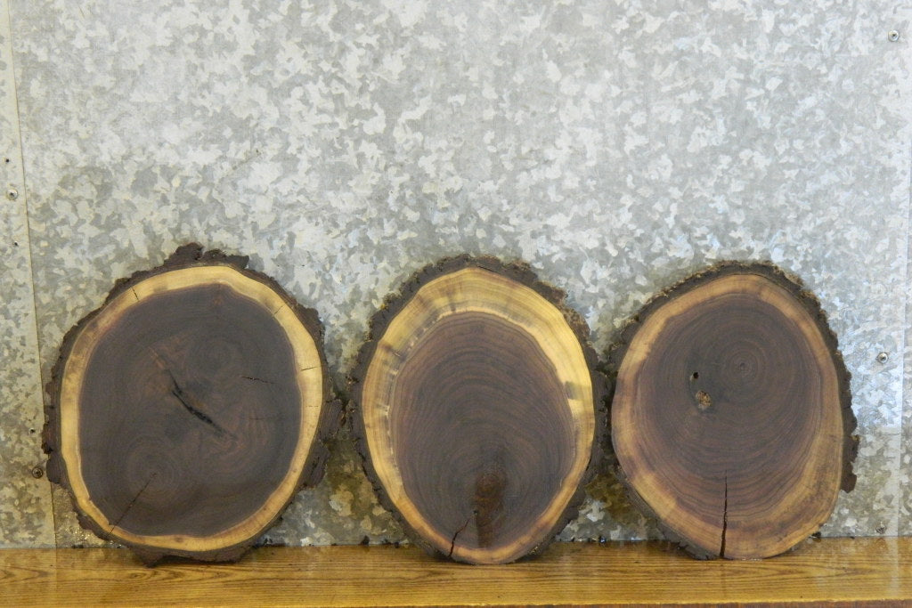 3- Salvaged Round Cut Live Edge Bark Taxidermy Base Wood Slabs 12732-12734