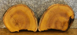 2- Live Edge Round Cut Mulberry Centerpiece/Wall Art Slabs 12806-12807