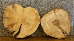 2- Round Cut Live Edge Spalted Maple Centerpiece Wood Slabs 12818-12819