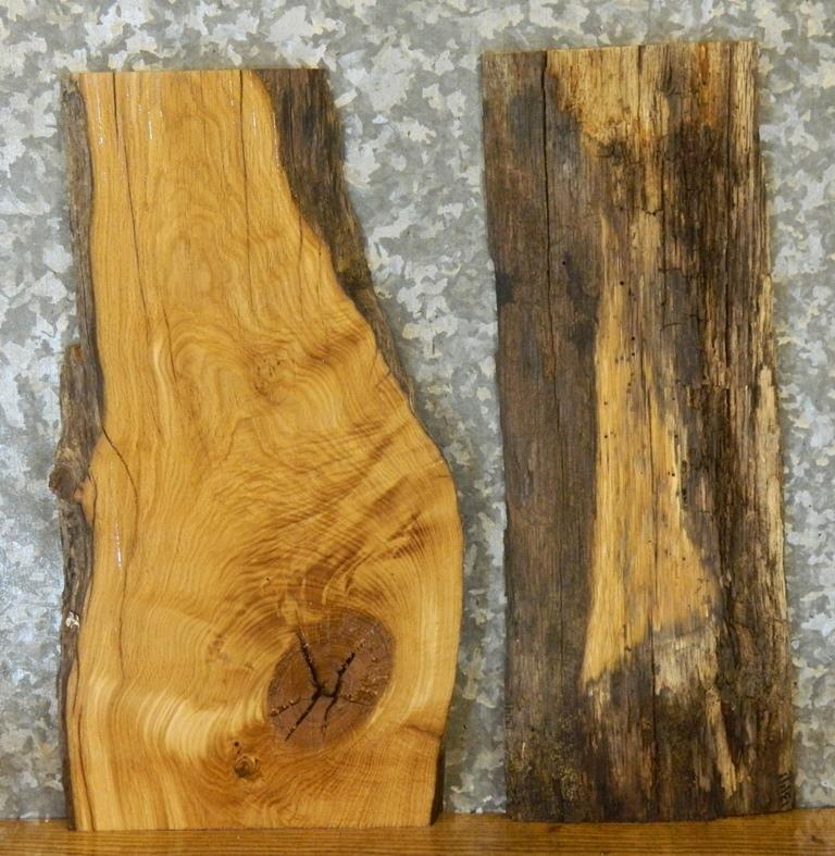 2- Natural Edge Salvaged White Oak Taxidermy Base/Craft Pack Slabs 13140-13141