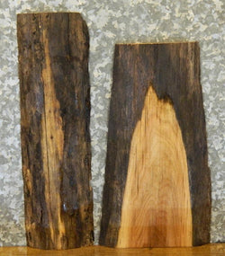 2- Salvaged Natural Edge Black Walnut Craft Pack/Taxidermy Base Slabs 13229-13230