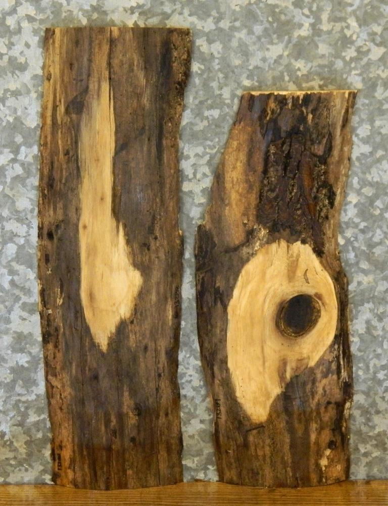 2- Rustic Natural Edge Black Walnut Taxidermy Base/Craft Pack Slabs 13288-13289