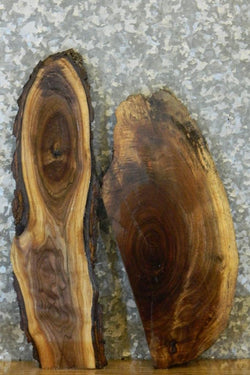 2- Partial Live Edge Black Walnut Taxidermy Base Slabs 13440-13441
