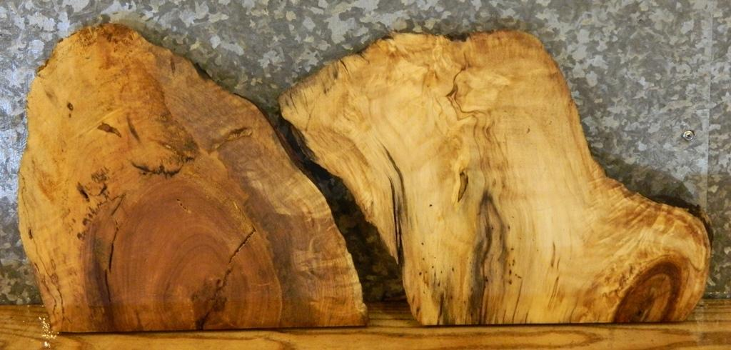 2- Natural Edge Spalted Maple Taxidermy Base Rustic Wood Slabs 13532-13533