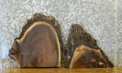 2- Taxidermy Base/Craft Pack Natural Edge Black Walnut Wood Slabs 13570-13571