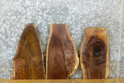3- Rustic Live Edge Black Walnut Taxidermy Bases/Craft Pack 13603-13605