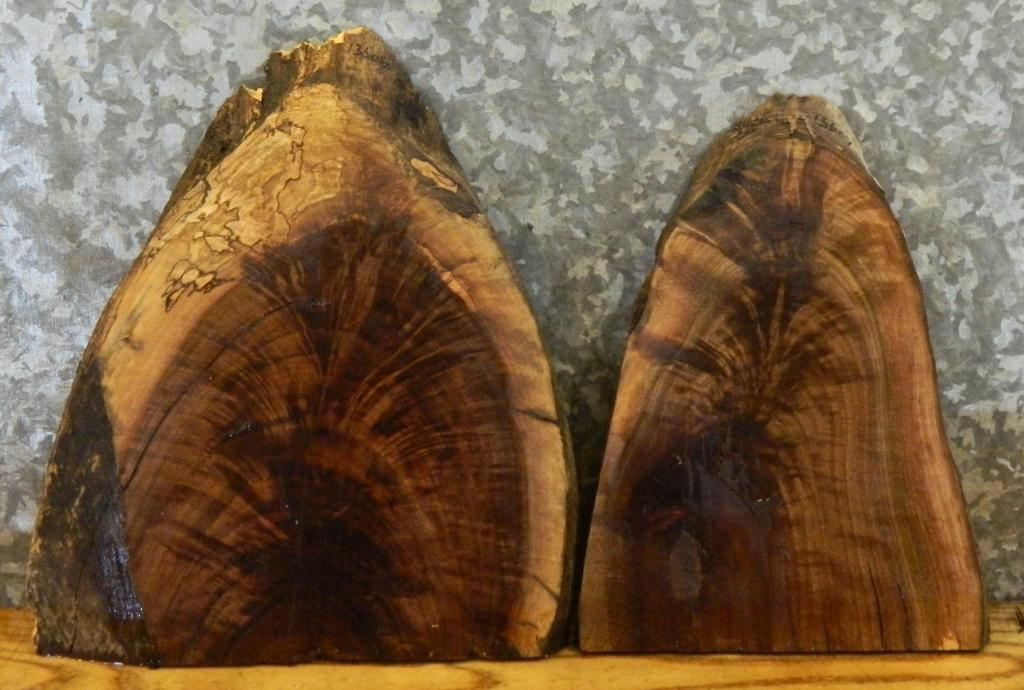 2- Natural Edge Black Walnut Taxidermy Base/Centerpiece Slabs 13606-13607