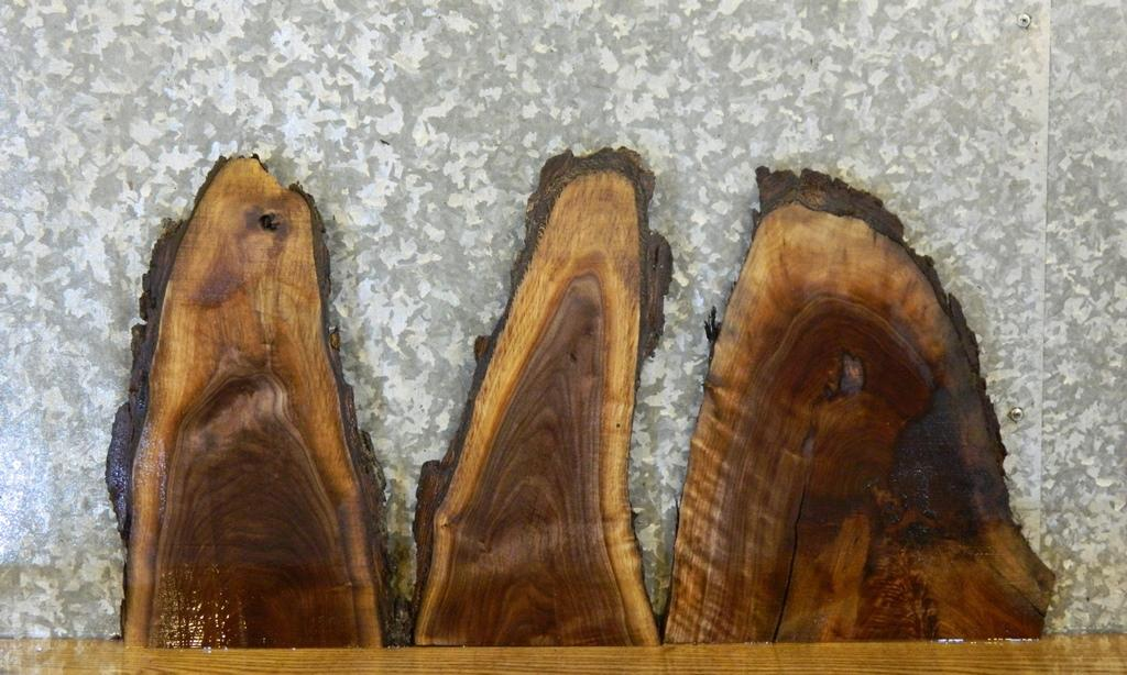3- Taxidermy Base/Craft Pack Live Edge Black Walnut Rustic Wood Slabs 13670-13672
