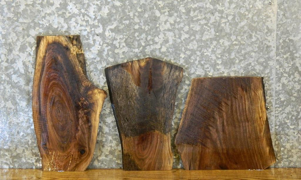 3- Partial Live Edge Black Walnut Craft Pack/Taxidermy Base Slabs 13822-13824