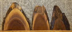 6- Taxidermy Bases Partial Live Edge Black Walnut Craft Pack Slabs 13865-13869,13872