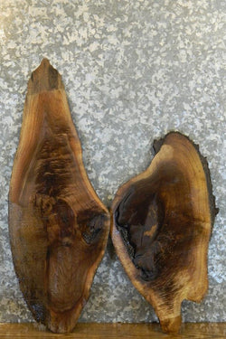 2- Live Edge Black Walnut Oval Cut Taxidermy Bases 14214-14215