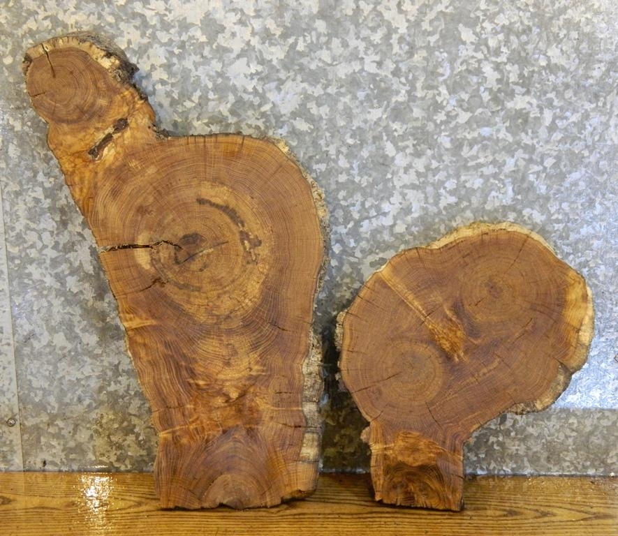 2- White Oak Partial Live Edge Oval Cut Taxidermy Base Wood Slabs 14287-14288