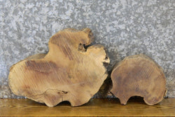 2- Round Cut Live Edge Mulberry Centerpieces/Craft Pack Slabs 14450-14451