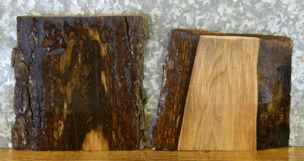 2- Black Walnut Rustic Live Edge Craft Pack/Taxidermy Base Slabs 14484