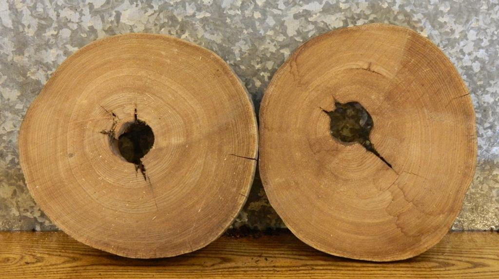 2- Tree Log Slice Round Cut Elm Wall Art/Room Decor Wood Slabs 14488
