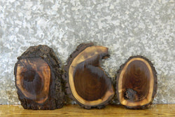 3- Live Edge Bark Black Walnut Round Cut Craft Pack Slabs 14548-14550