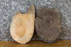2- Live Edge Round Cut Maple Craft Pack/Taxidermy Base Slabs 14556-14557