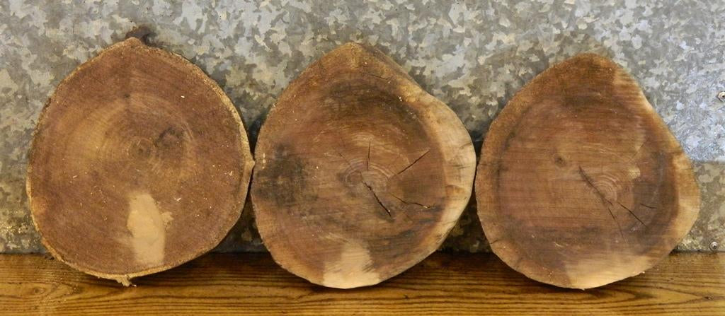 3- Natural Edge Round Cut Black Walnut Taxidermy Base Wood Slabs 14600-14602
