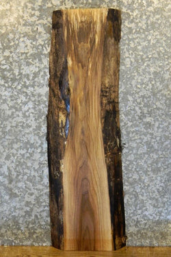 Natural Edge Black Walnut End Table Top Slab 1827
