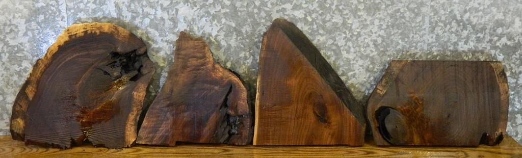 4- Partial Live Edge Round Cut Black Walnut Taxidermy Base Slabs 1877-1880