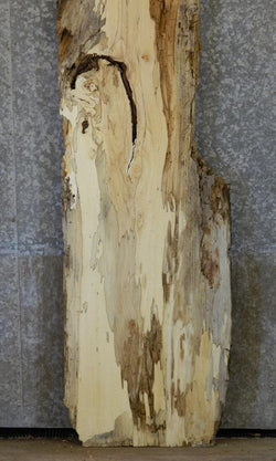 Spalted Maple Natural Edge Rustic Head/Footboard Wood Slab A5 20473