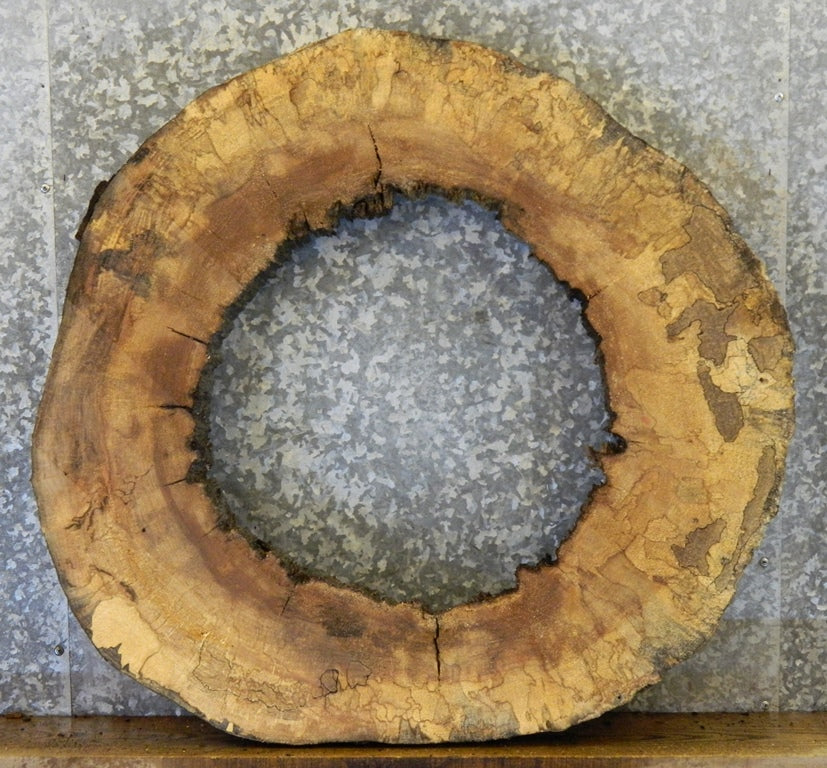 Round Cut Spalted Maple Live Edge Pond/Coffee Table Top Slab 20804