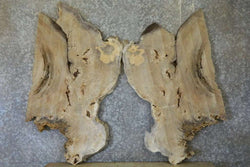 2- Live Edge Bookmatched Cottonwood Burl Butterfly Wall Art Slabs 20820-20821