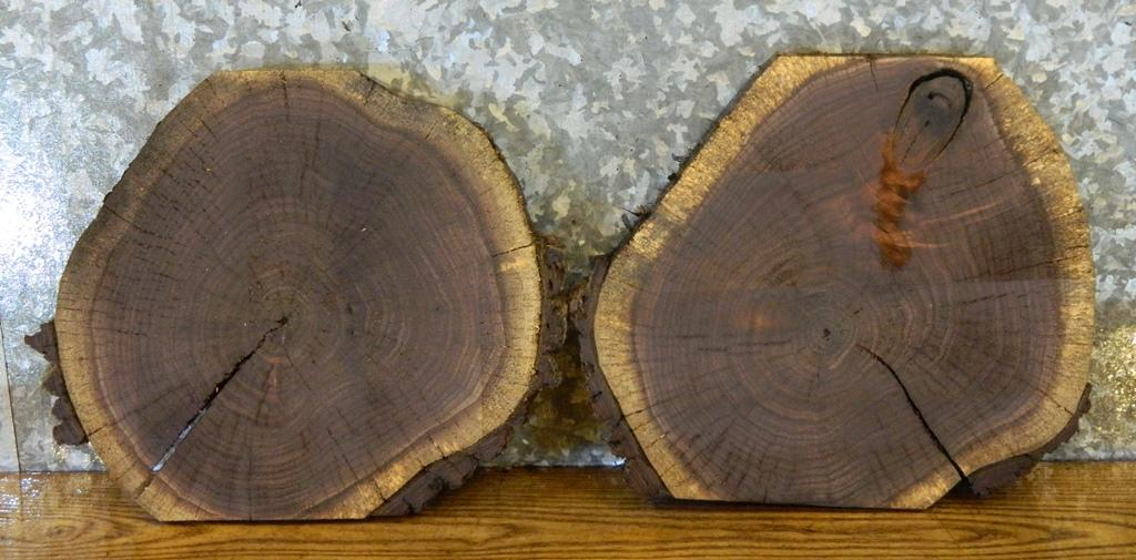 2- Salvaged Partial Live Edge Black Walnut Round Cut Craft Pack Slabs 242-243