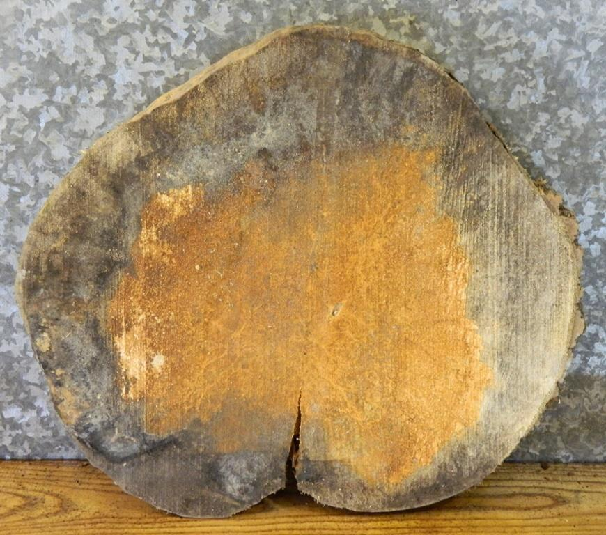 Display Stand Round Cut Natural Edge Boxelder End Table Top Slab 40291