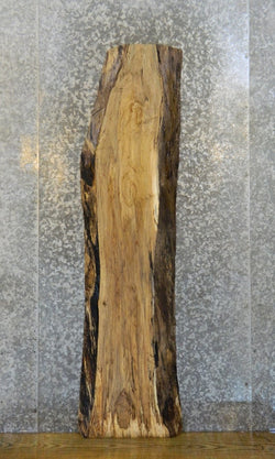 Spalted Maple Rustic Natural Edge Coffee Table Top Wood Slab 4368
