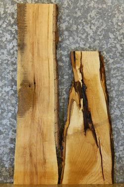 2- Live Edge Maple Rustic Taxidermy Base/Craft Pack 5251-5252