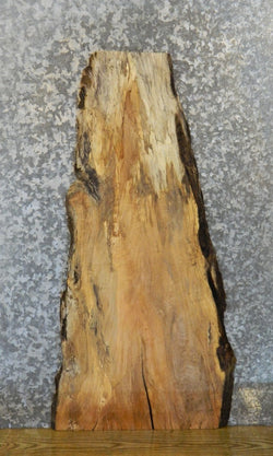 Salvaged Live Edge Spalted Maple End/Side Table Top Slab 612