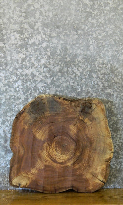 Live Edge Hackberry Round Cut End/Side Table Top Slab 6407