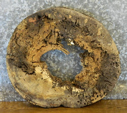 Very Rustic Natural Edge Round Cut Spalted Maple Wall Art Wood Slab 6422