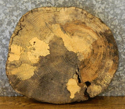 Rustic Live Edge Tree Slice Hackberry Round Cut End Table Top Slab 6469