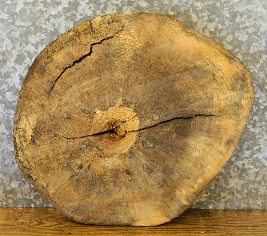 End/Side Table Top Spalted Maple Round Cut Tree Slice 6484