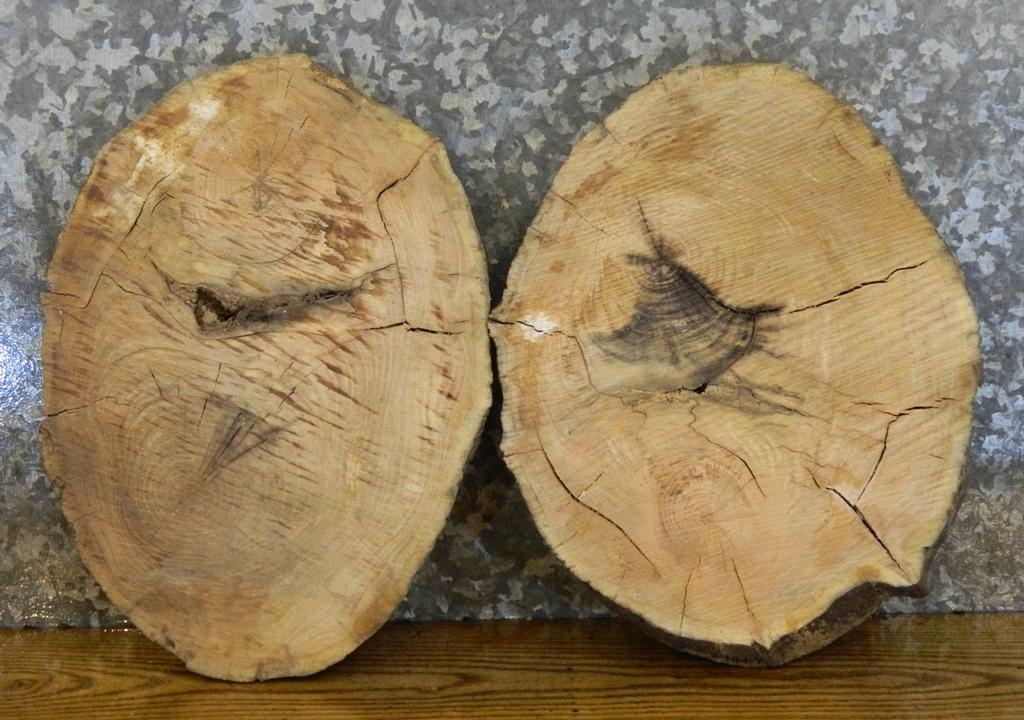2- Tree Log Slice Locust Clock Plaque/Centerpeice 6494