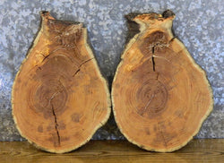 2- DIY Live Edge Locust Round Cut Charcuterie Boards/Wood Slabs 6496